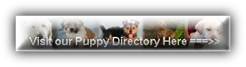 Our Puppy Directory